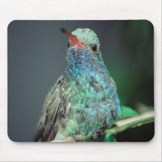 Westmorland, Westmorland Tobaso, Hummingbird Mouse Mat