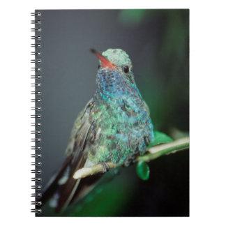 Westmorland, Westmorland Tobaso, Hummingbird Notebook