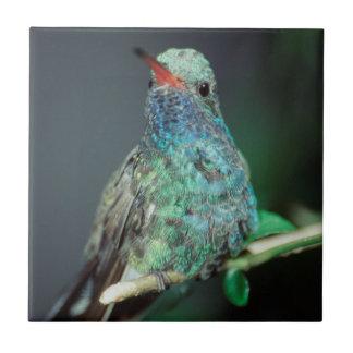 Westmorland, Westmorland Tobaso, Hummingbird Tile