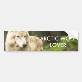 Wet Arctic Wolf in Spring Photo Bumper Sticker