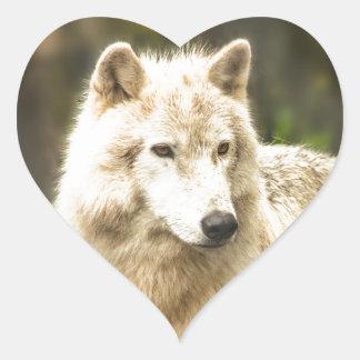 Wet Arctic Wolf in Spring Photo Heart Sticker
