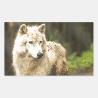 Wet Arctic Wolf in Spring Photo Rectangular Sticker