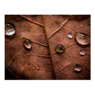 wet autumn leaf 2 postcard