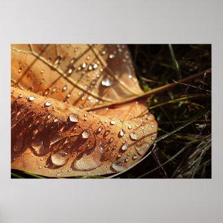 Wet Autumn Leaf - Poster