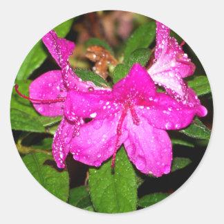 Wet Azalea Blooms Round Sticker