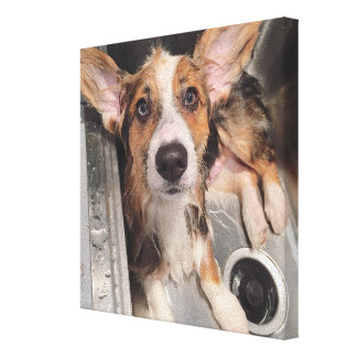 Wet Baby Corgi Puppy (With Huge Ears In The Sink) Canvas Print