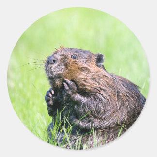 Wet Beaver Classic Round Sticker