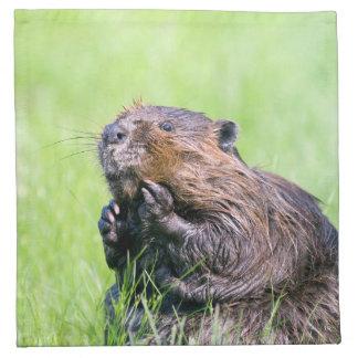 Wet Beaver Napkin
