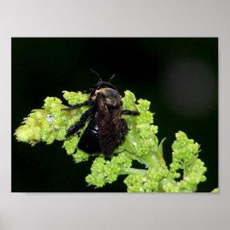 Wet Bumblebee Poster