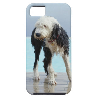 Wet Dog By a Swimming Pool iPhone 5 Cover