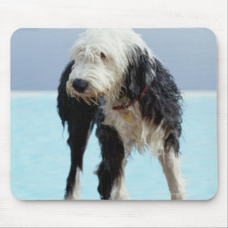 Wet Dog By a Swimming Pool Mouse Pad