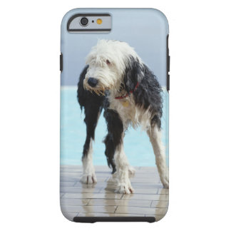 Wet Dog By a Swimming Pool Tough iPhone 6 Case