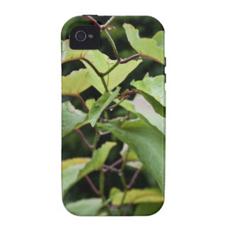 Wet green leaves iPhone 4/4S covers