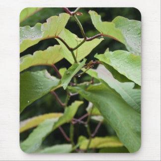 Wet green leaves mousepads