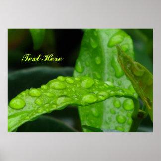 Wet Green Leaves Print