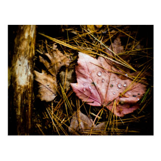 wet leaf-fall forest floor post card