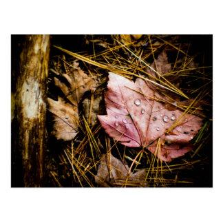 wet leaf-fall forest floor postcard