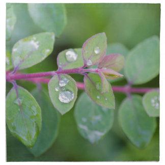 wet leaf in the garden napkin