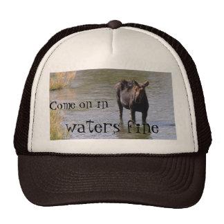 wet moose, Come on in, waters fine Cap