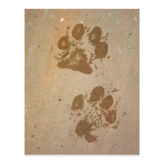 Wet Paw Prints 21.5 Cm X 28 Cm Flyer
