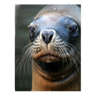 Wet Seal Postard Postcard