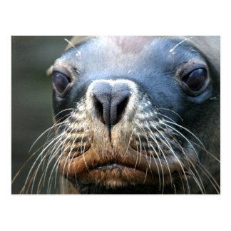 Wet Seal Postcard