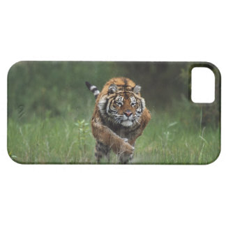 Wet Siberian Tiger Charging Case For The iPhone 5