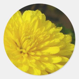 Wet Yellow Mum Stickers