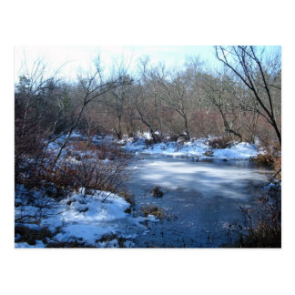 Wetland Ponds In Winter Postcard