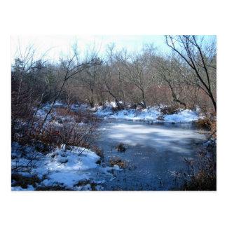 Wetland Ponds In Winter Postcard