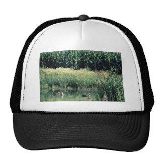Wetland, Pothole Hats