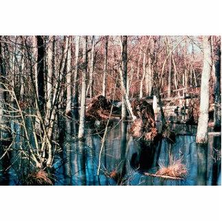 Wetland Upland Wood Swamp Photo Sculptures