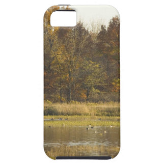 WETLAND WITH AUTUMN TREES IN BACKGROUND AND DUCKS iPhone 5 CASE