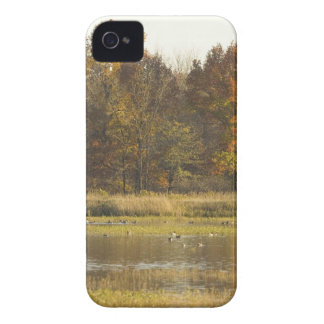 WETLAND WITH AUTUMN TREES IN BACKGROUND AND DUCKS Case-Mate iPhone 4 CASES