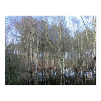 Wetlands in Delamere Forest Postcard