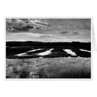 Wetlands Note Card