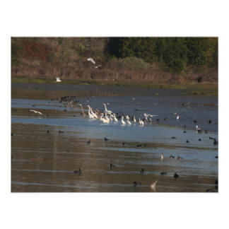 Wetlands Wader Birds Photography Print Photographic Print