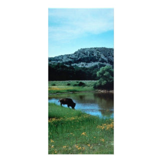 Wetlands with Buffalo Full Color Rack Card