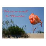 We've moved to Florida! Beach Flamingo Postcard