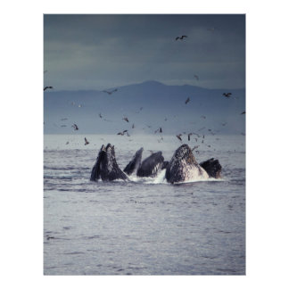 Whale 21.5 Cm X 28 Cm Flyer