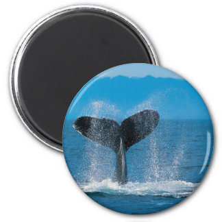 Whale 6 Cm Round Magnet