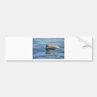Whale and Reflection Bumper Sticker