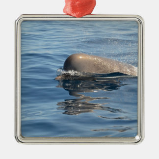 Whale and Reflection Christmas Ornament