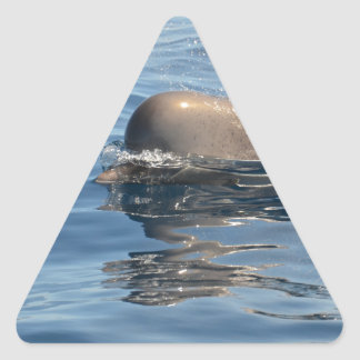 Whale and Reflection Triangle Sticker