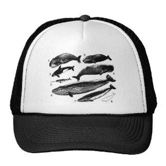 whale-clip-art-1 mesh hat