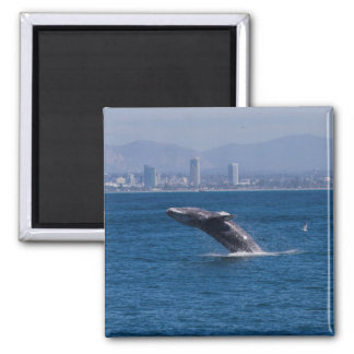 Whale of a time magnet