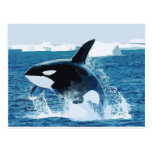 Whale Orca  Water Animal Sea Ocean Fish Peace Love Postcard