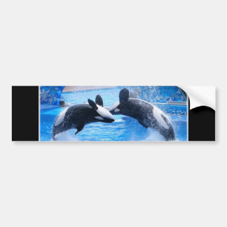 Whale Photo Bumper Sticker