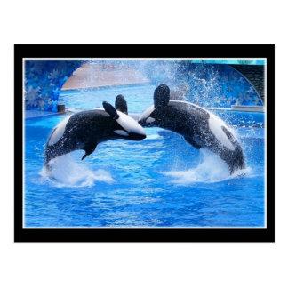 Whale Photo Postcard