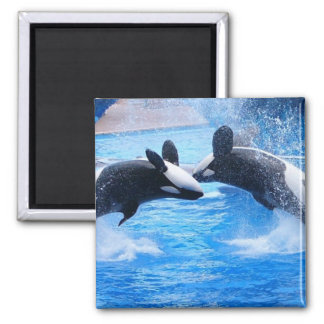 Whale Photo Square Magnet Magnet